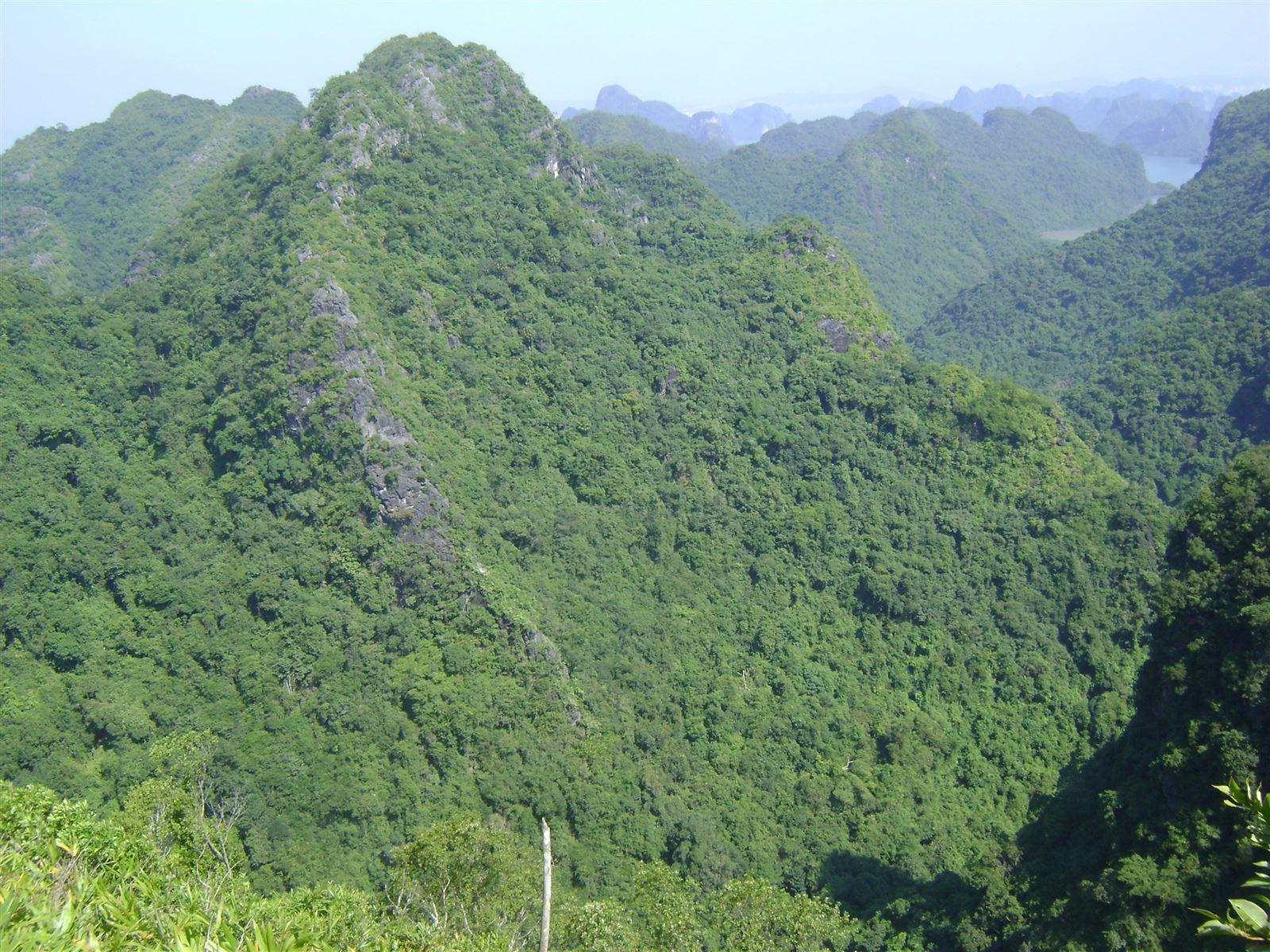 a 1 ( HST rừng núi đá vôi)