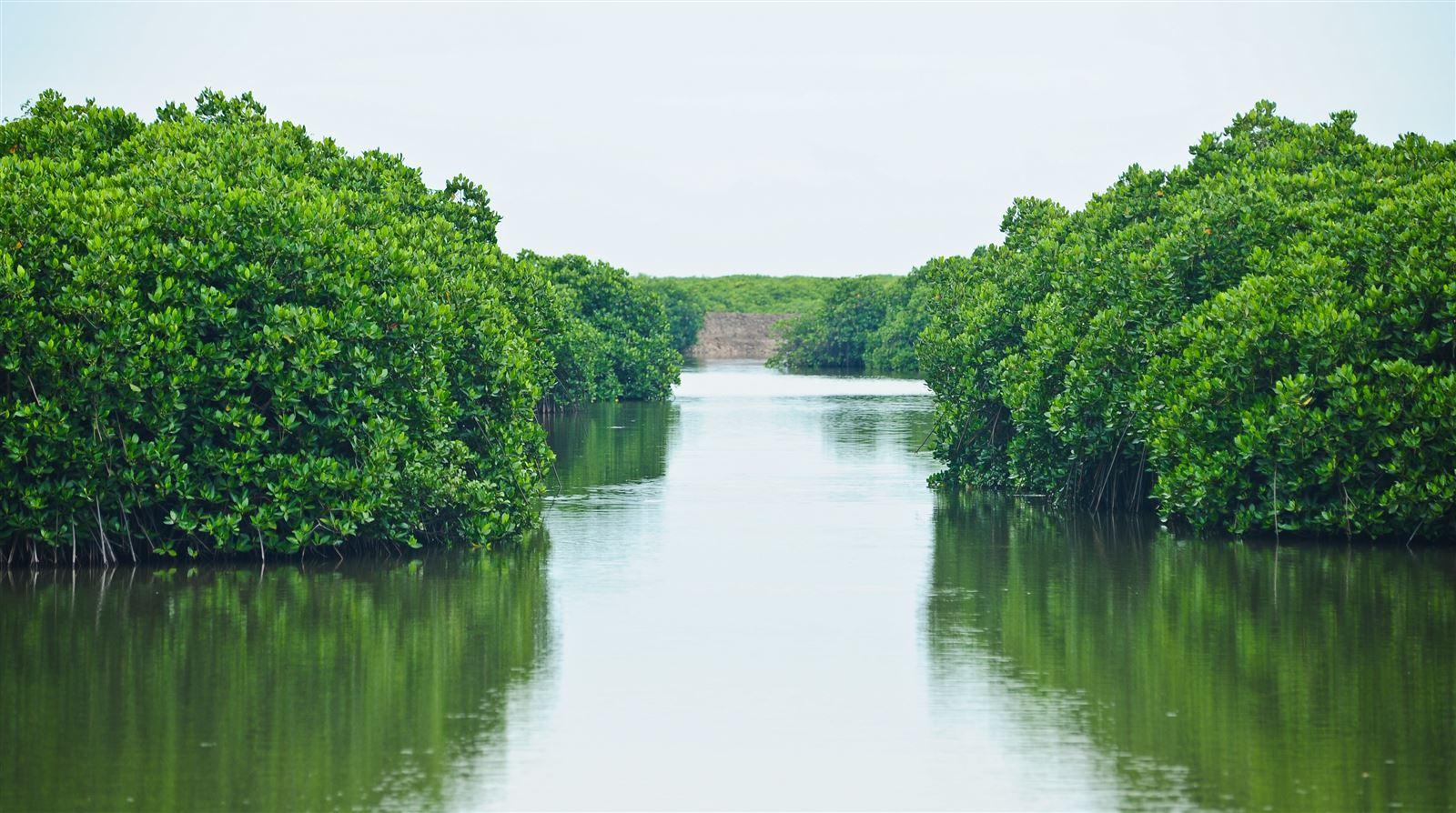 a 3 (HST rừng ngập mặn)