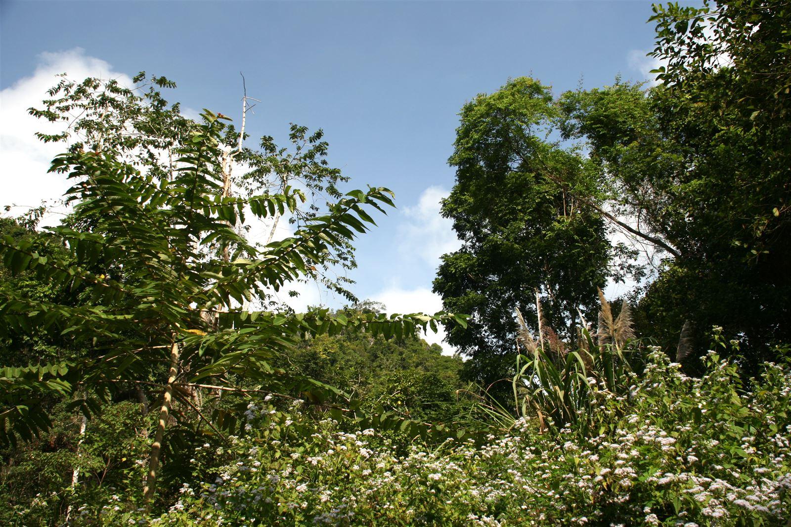 a 4 (HST rừng thường xanh mưa ẩm nhiệt đới)