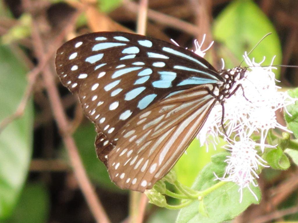 bướm trong VQG