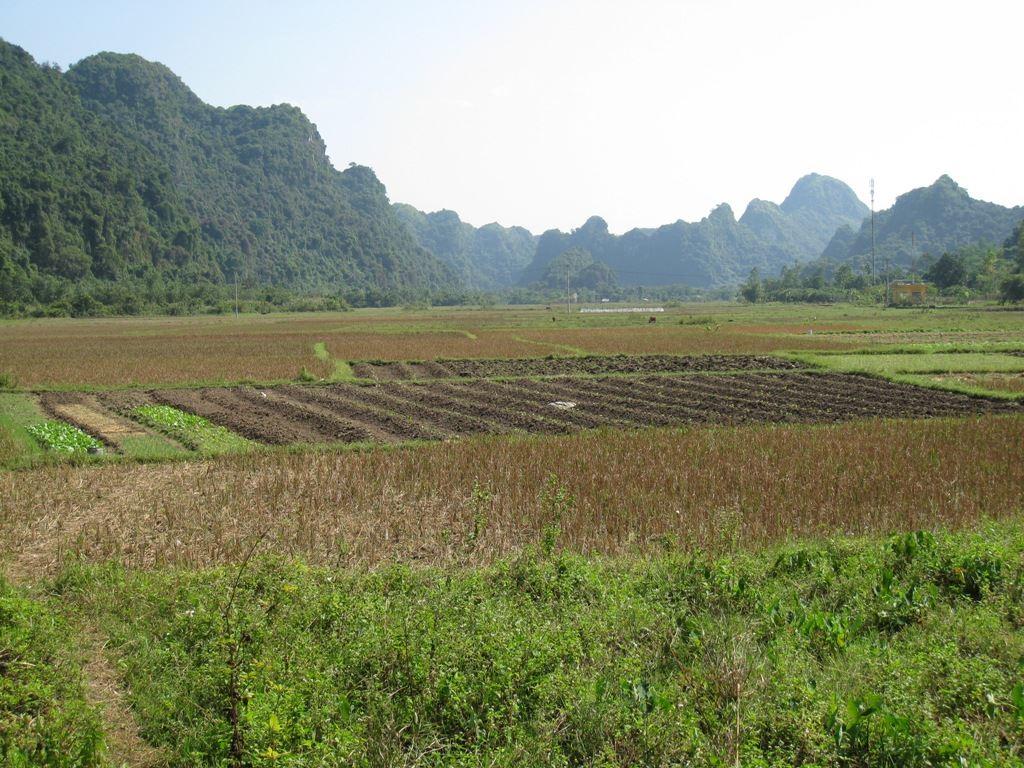 field in Viet Hai commune