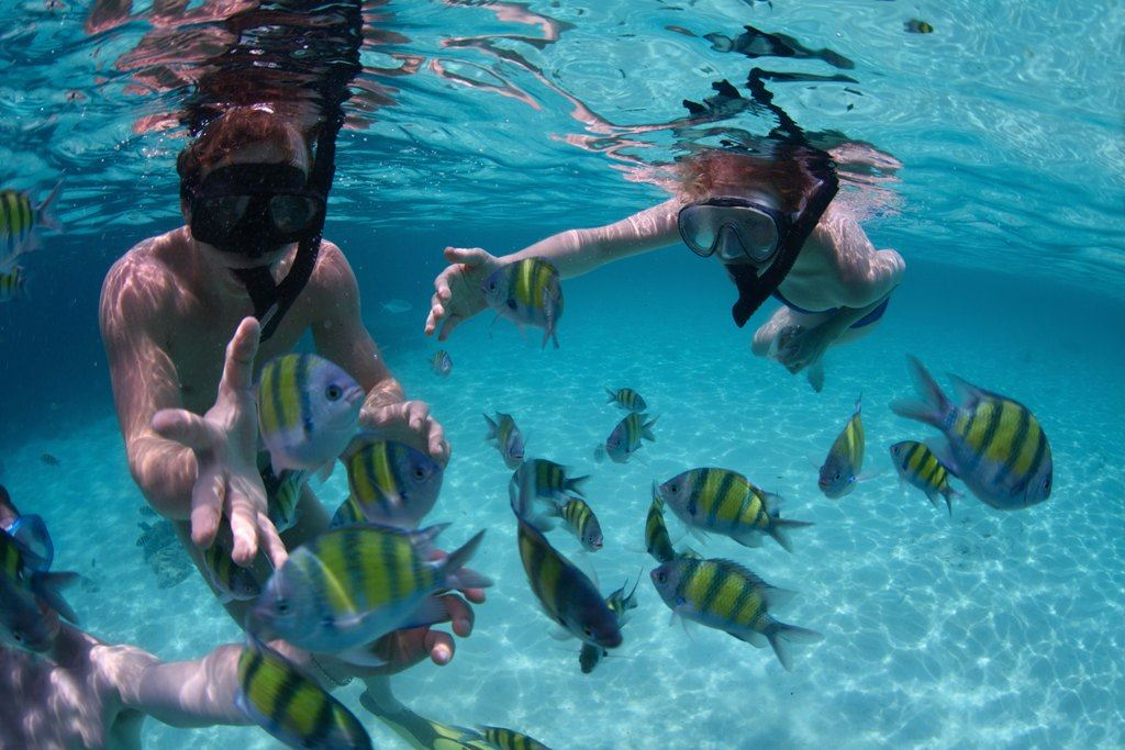 Lặn ngắm san hô và sinh vật biển